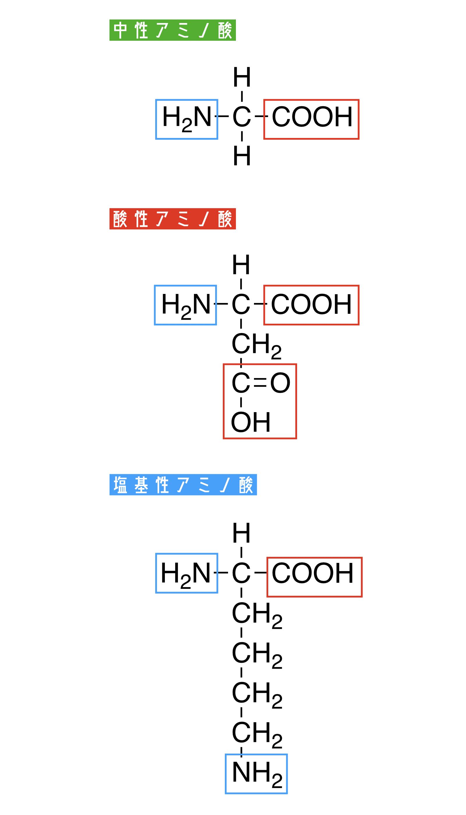 アミノ酸とは?定義から構造、分...