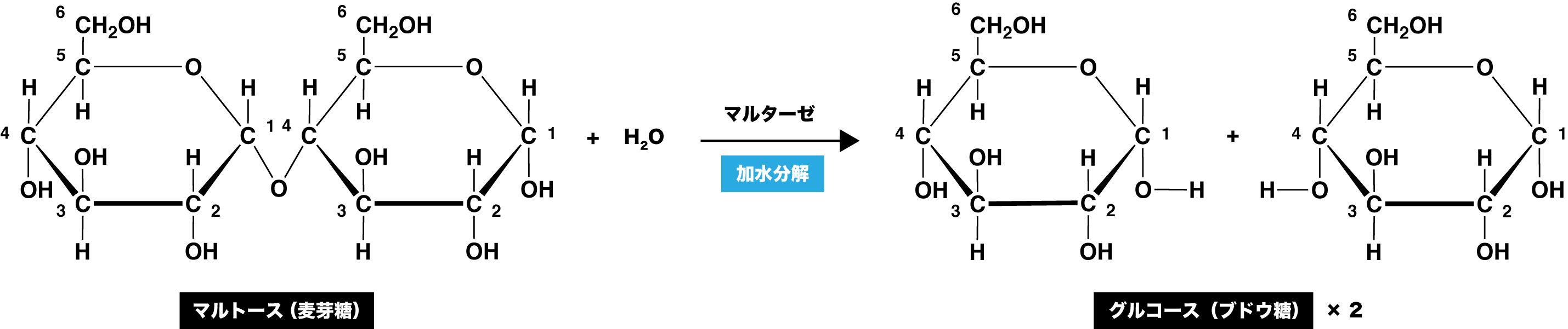 二糖類】マルトース/スクロースなどの還元性・構造式・結合・覚え方 ...