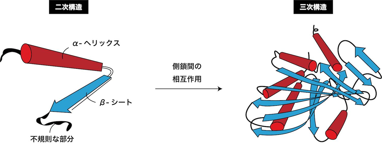 構造 立体 タンパク質 の